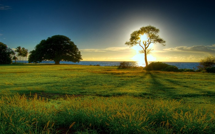 Sunrise Tree-the worlds natural landscape photography Views:35390