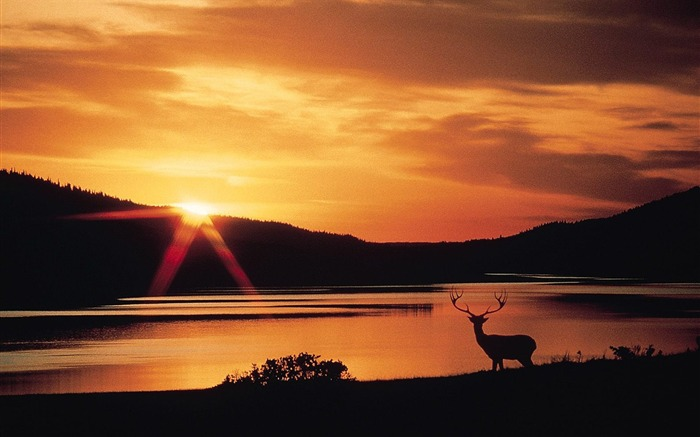 Sunset in the reindeer wallpaper Views:4533
