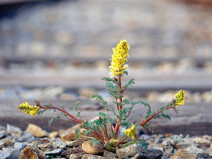Wild Flower Growing From the Ground Picture Views:2980