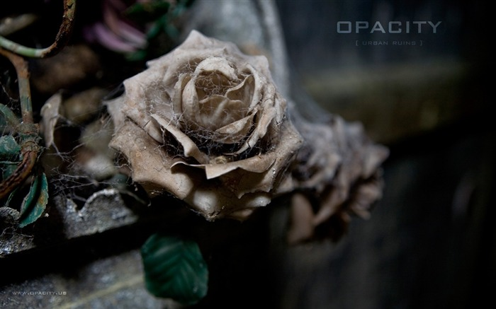 Withered Rose La Crypte des Fleurs The Forgotten beauty Views:2836