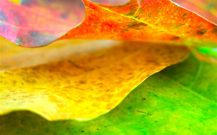color leaves wallpaper Views:8450
