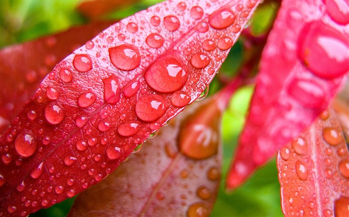 Colorful leaves of plants under the wallpaper macro Views:18560