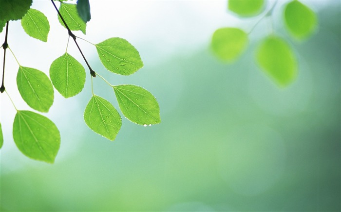 10 Soft Focus Green Leaves Pictures-Ethereal Green Leaves photos  Views:5656