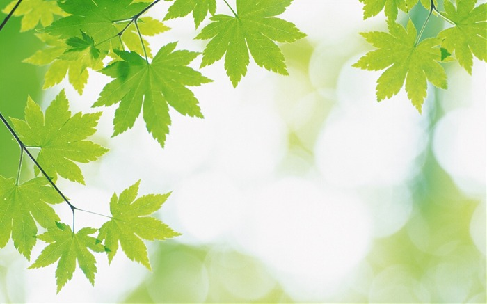 14 Soft Focus Green Leaves Pictures-Ethereal Green Leaves photos Views:9570