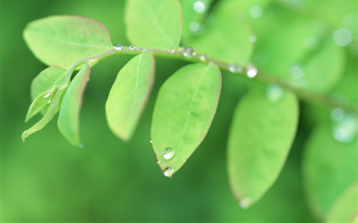 19 Soft Focus Green Leaves Pictures-Ethereal Green Leaves photos Views:3386