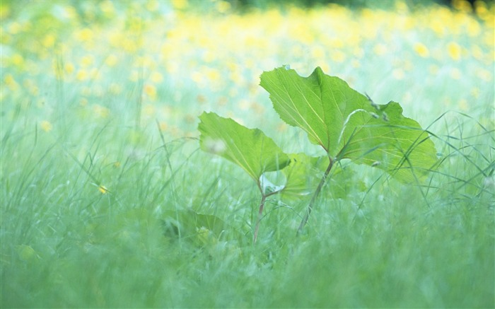 1 Soft Focus Green Leaves photos-Idyllic Green Leaves Wallpaper Views:8870