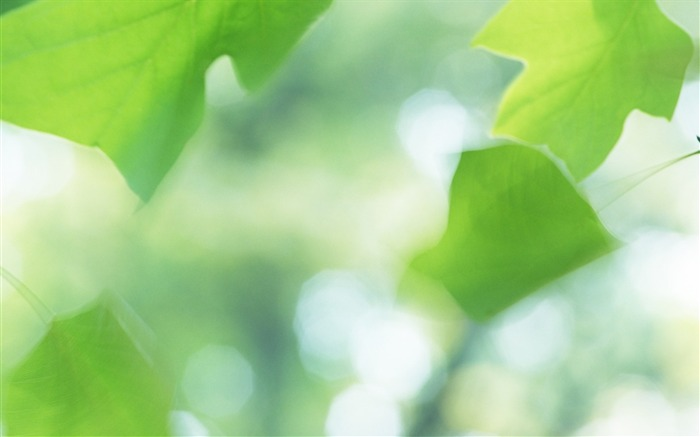 20 Soft Focus Green Leaves Pictures-Ethereal Green Leaves photos Views:3276
