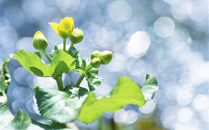 25 Soft Focus Green Leaves photos-Idyllic Green Leaves Wallpaper Views:3604