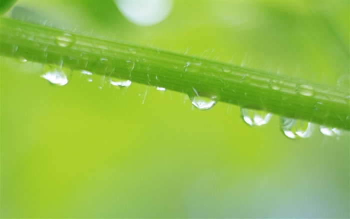 26 close-up photo of Water droplets on leaf Views:4767