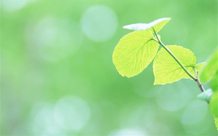 2 Soft Focus Green Leaves Pictures-Ethereal Green Leaves photos Views:5509