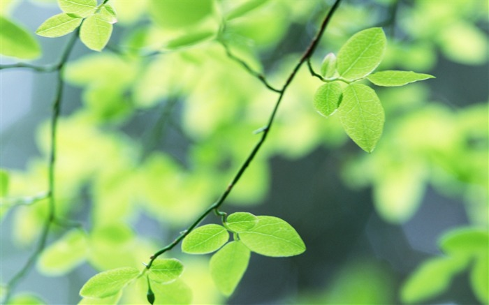 31 Soft Focus Green Leaves Pictures-Ethereal Green Leaves photos Views:3260
