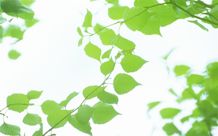 32 Soft Focus Green Leaves Pictures-Ethereal Green Leaves photos Views:3160