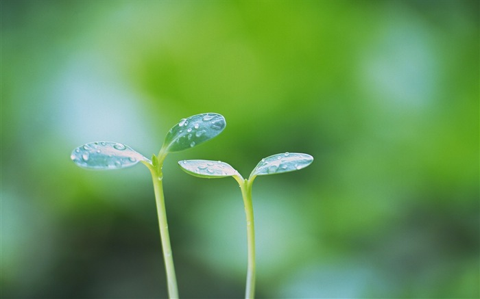 37 Soft Focus Sprouts Photos-Dreamy greeny sprouts photo Views:3840