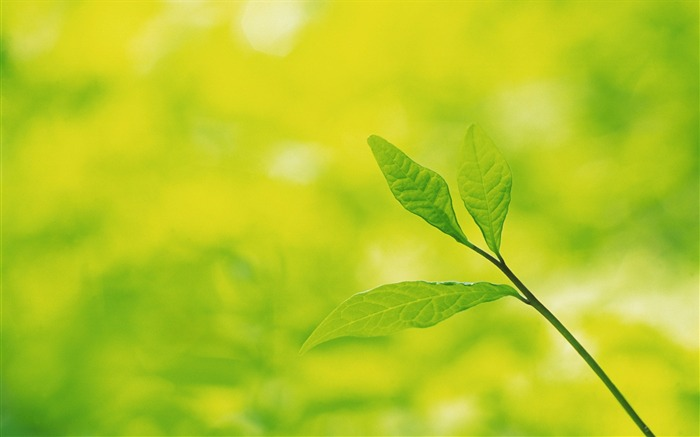 39 Soft Focus Green Leaves photos-Idyllic Green Leaves Wallpaper Views:8109