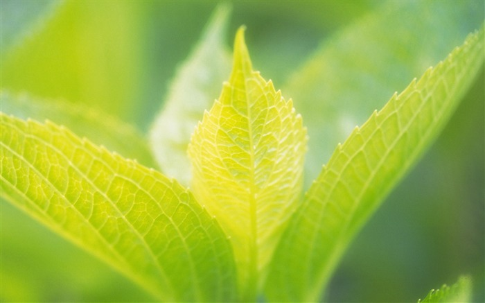 40 soft focus green leaves photo-hazy soft green leaves photos Views:3519