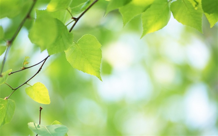 7 Soft Focus Green Leaves Pictures-Ethereal Green Leaves photos Views:7594