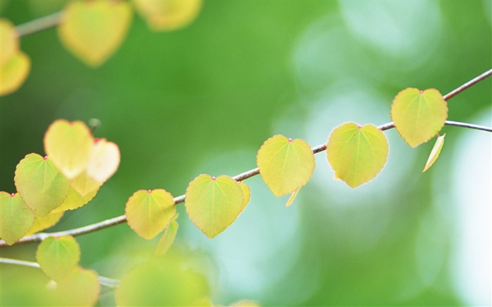 9 Heart shaped leaves photo-Ethereal Romantic Leaves photos Views:6818