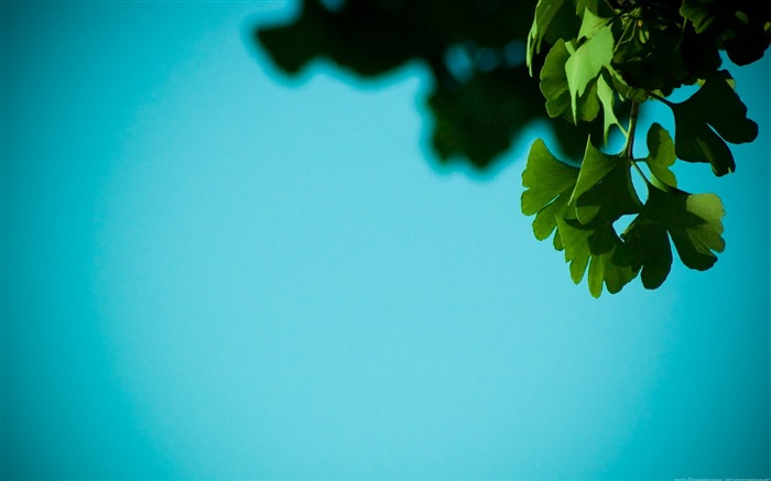 Green leaves-Alternative Landscape Photography Views:5565