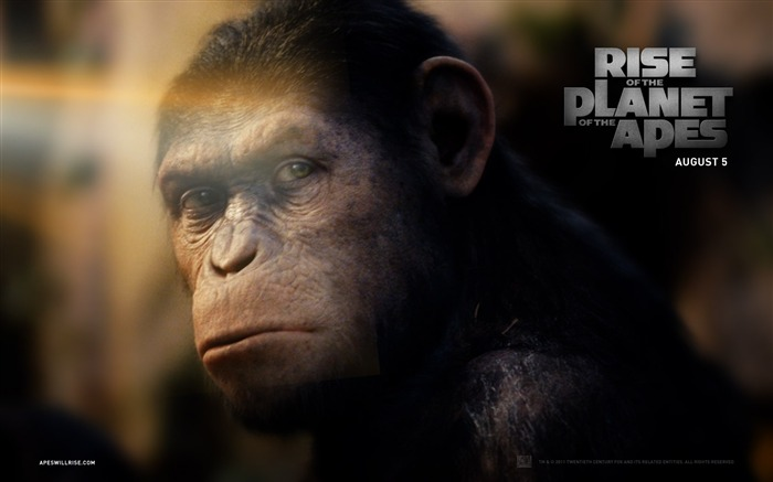 Rise of the Planet of the Apes movie wallpaper 05 Views:4804