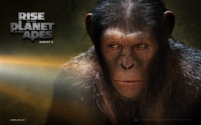 Rise of the Planet of the Apes movie wallpaper 06 Views:3991