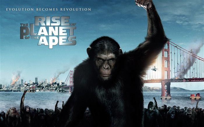Rise of the Planet of the Apes movie wallpaper Views:5591