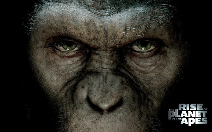 Rise of the Planet of the Apes movie wallpaper 08 Views:8837