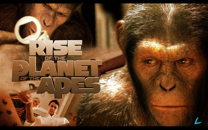 Rise of the Planet of the Apes movie wallpaper 12 Views:8229