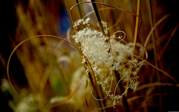 Weeds-Alternative Landscape Photography Views:6995