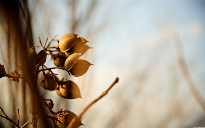 Withered fruit-Alternative Landscape Photography Views:3772