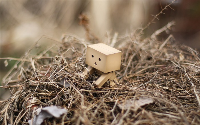 danbo wallpapers-Second Series 23 Views:8354