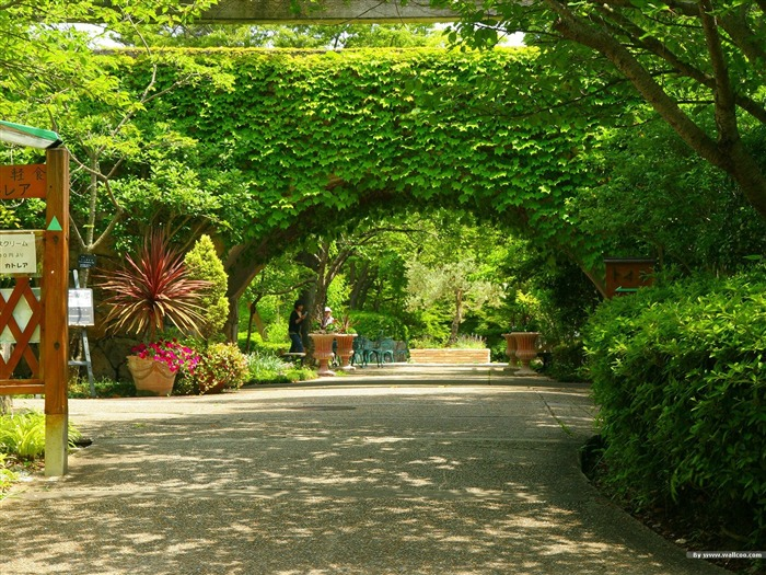 Arches covered with green leaves- Japanese garden art landscape wallpaper Views:14790
