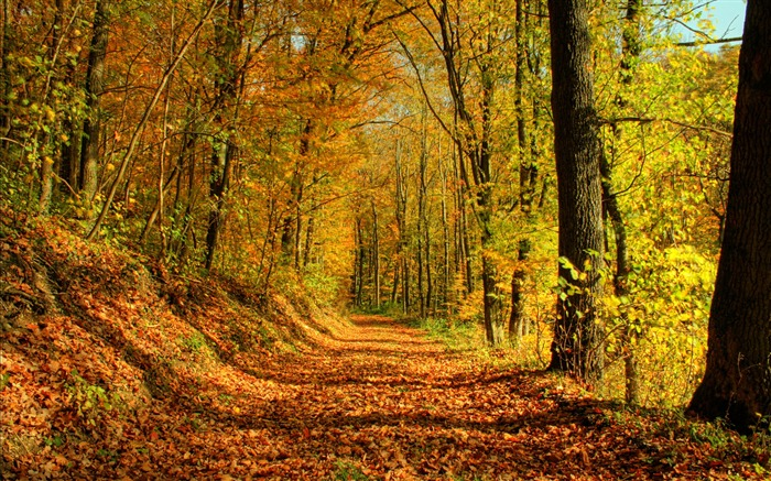 Autumn leaves trees- Autumn Landscape wallpaper Views:79625