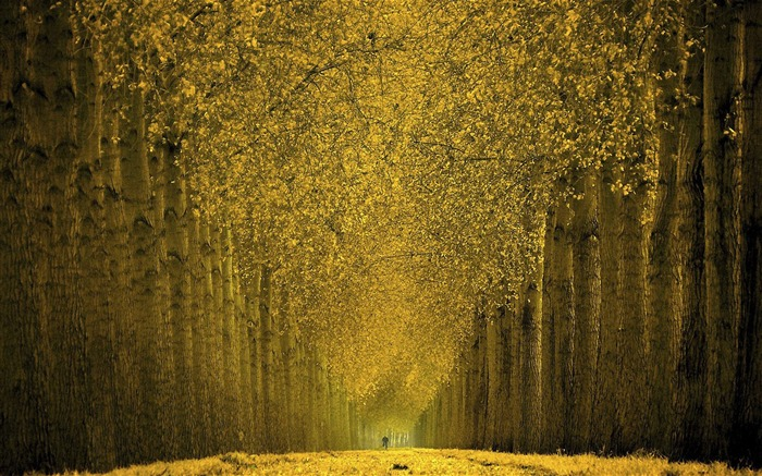 Autumn tree-lined trail- Autumn Landscape wallpaper Views:34891