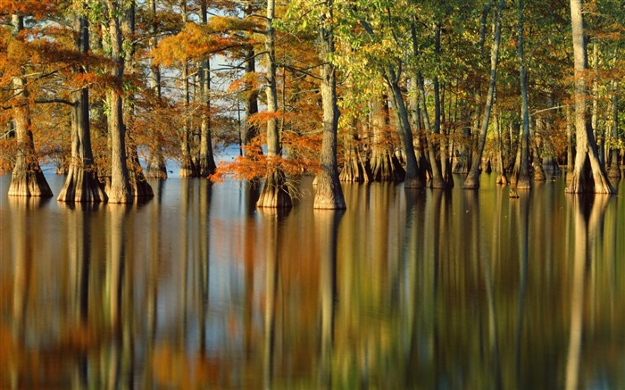 Autumn trees in water- Autumn Landscape wallpaper Views:10724