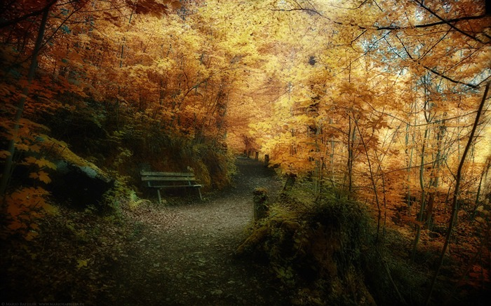 Autumn woods trail- Autumn Landscape wallpaper Views:17971