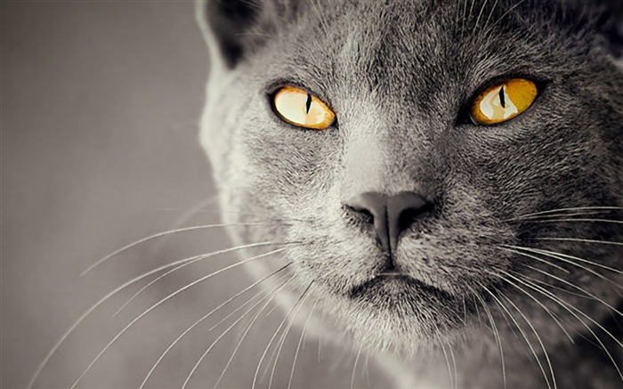 Cat close-up-Animal World Series Wallpaper Views:4870