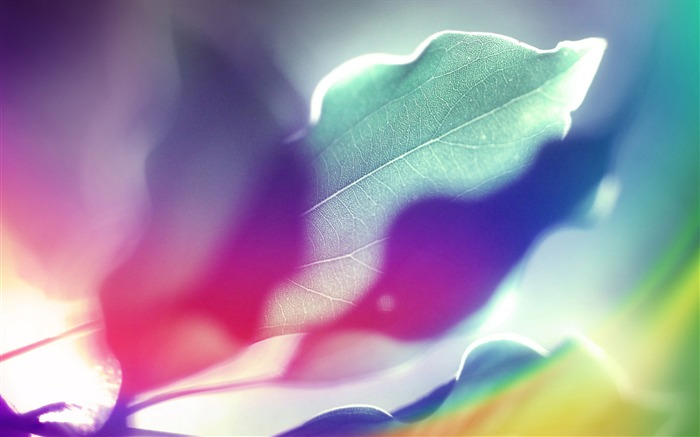 Colorful leaves under the sun-abstract design wallpaper background glare 01 Views:5139