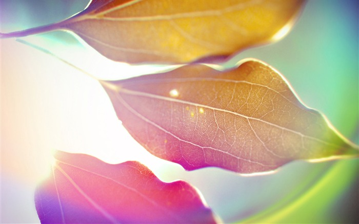 Colorful leaves under the sun-abstract design wallpaper background glare Views:5336