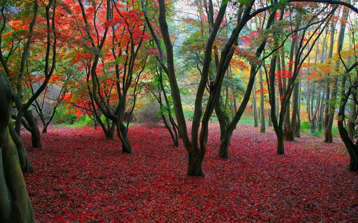 Colorful trees- Autumn Landscape wallpaper Views:10042