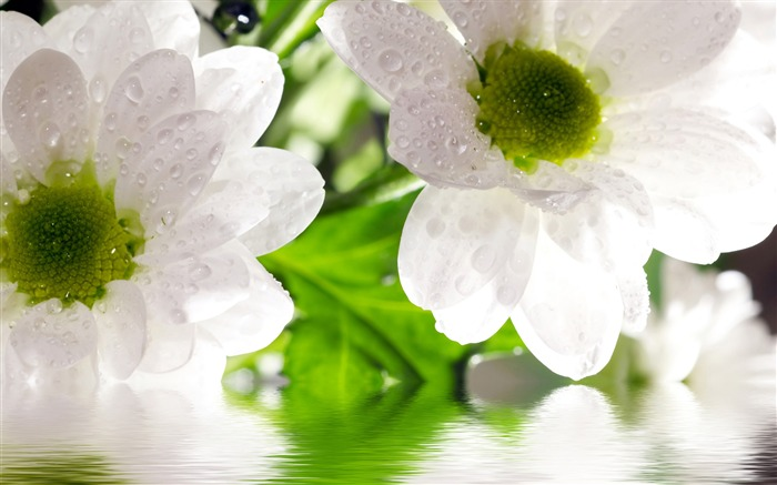 Drop in white flowers-Summer romance Feelings Views:6743