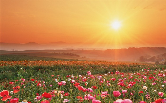 Flower Field-Summer romance Feelings Views:10123