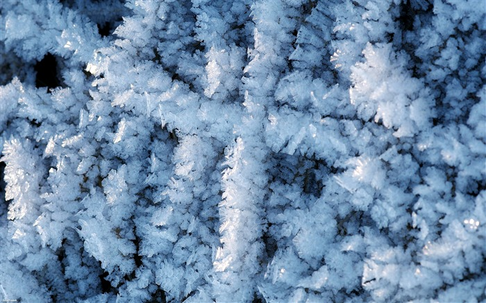 Frost-Nature Landscape wallpaper selected Views:5208