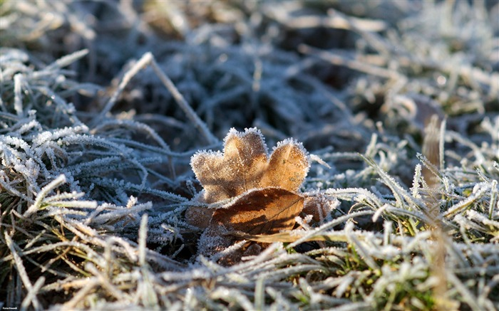 Frost leaves-Nature Landscape wallpaper selected Views:6323