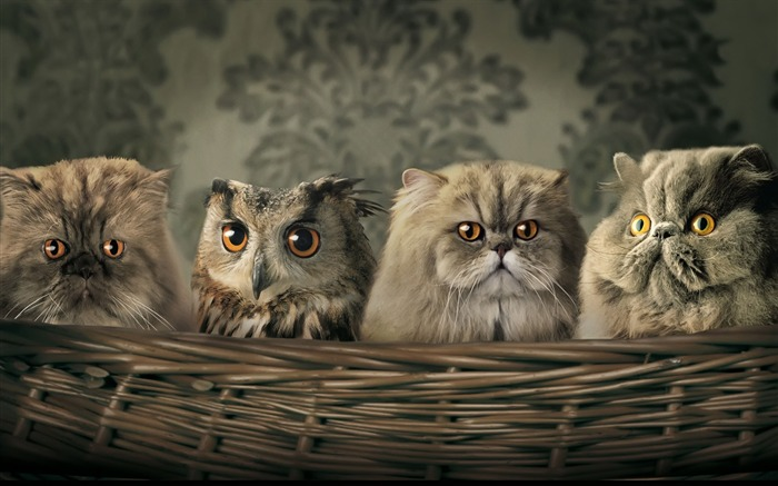 Into the family cat and owl-Animal World Series Wallpaper Views:9174