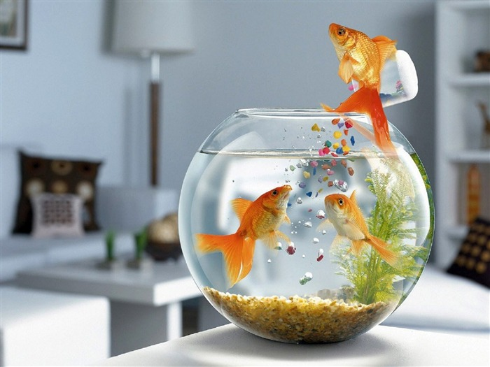 Jumping fish tank-Animal World Series Wallpaper Views:8880