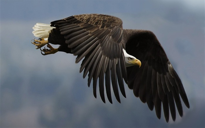 Keen eagle-Animal World Series Wallpaper Views:6402