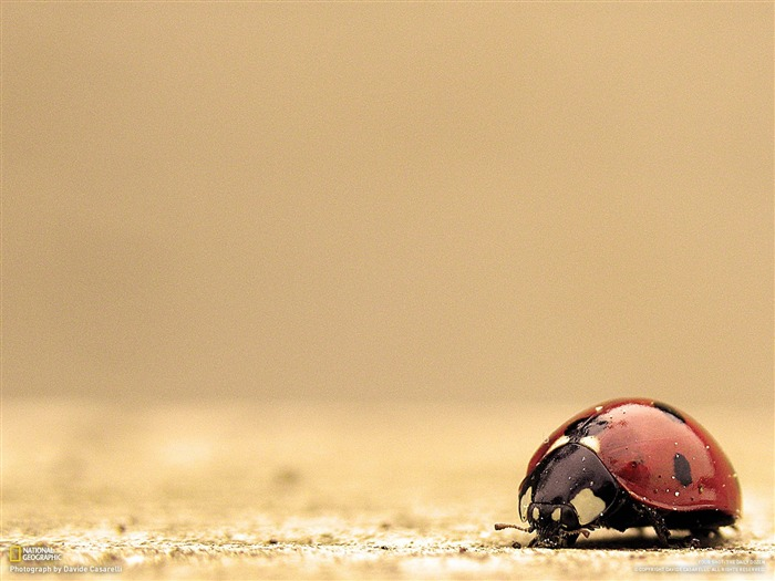 Ladybug-National Geographic-Photo of the Day Views:30802