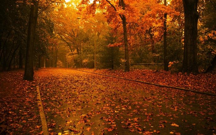 Maple forest is full of romantic- Autumn Landscape wallpaper Views:52195