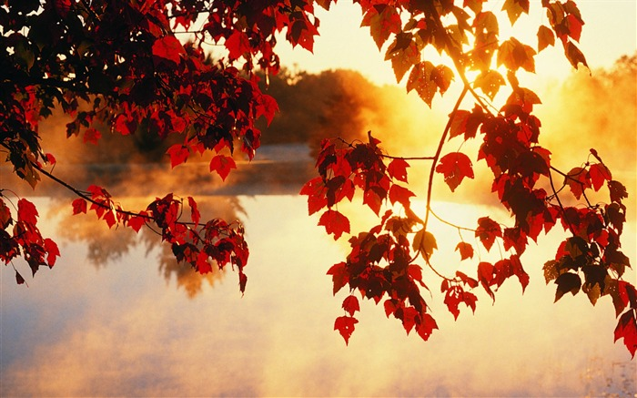 Maple red- Autumn Landscape wallpaper Views:22541