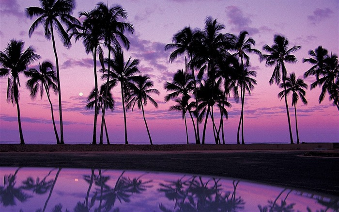 Oahu-Sunset in the palm tree wallpaper Views:12234